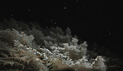 night winter landscape with falling snow and fir trees