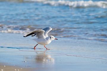 Seagull on the beach, blue sea