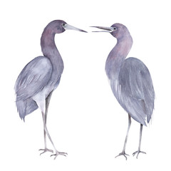 Little blue heron couple. Hand drawn isolated illustration