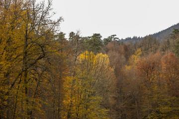 autumn on earth