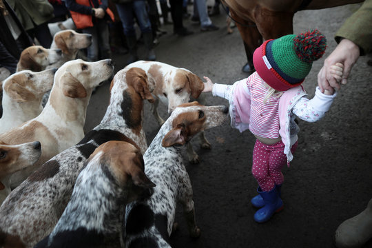 A young girl greets blood hound dogs as members of the Old Surrey Burstow and West Kent Hunt gather at Chiddingstone Castle during their annual Boxing Day hunt in Chiddingstone