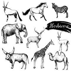 Set of sketch style hand drawn herbivore animals. Vector illustration isolated on white background.