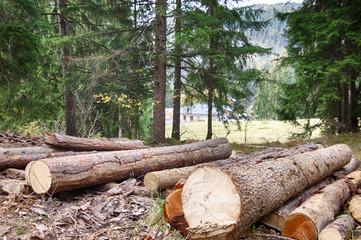 Tronchi di legno in Trentino Alto Adige