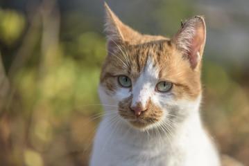 Street cat head close up