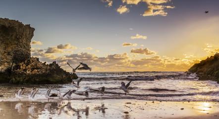 Seagulls on the beach near Perth, Western Australia, Australia