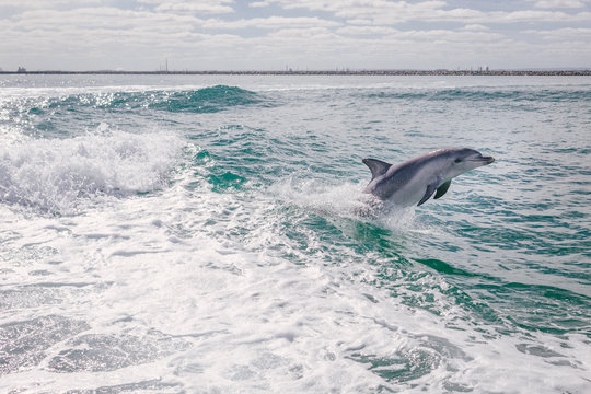 View of dolphin diving in sea