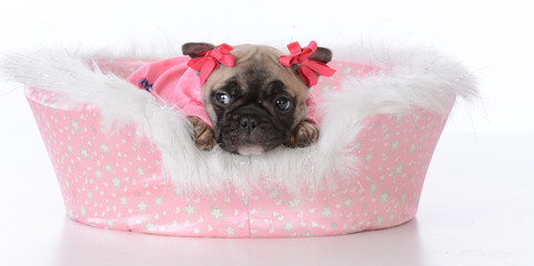 puppy in a dog bed