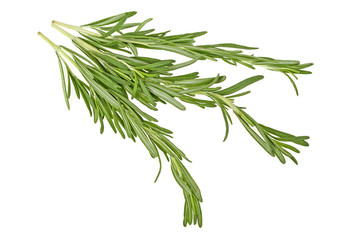 Rosemary sprigs isolated on a white background