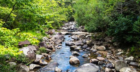 Rio com pedras cortando a floresta.
