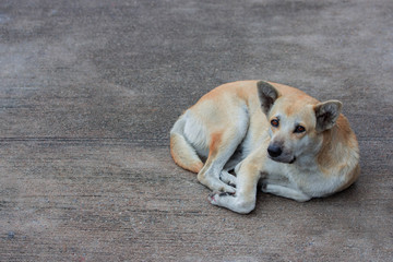 The stray dog resting on concrete road