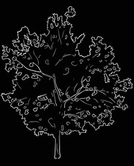 single isolated tree white sketch