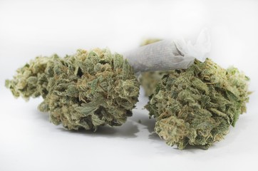 Green marijuana buds with joint laying on white background
