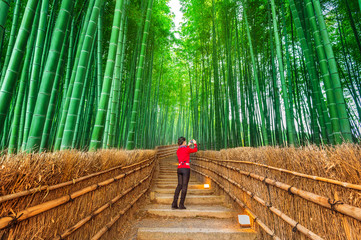 Wall Mural - Woman take a photo at Bamboo Forest in Kyoto, Japan.