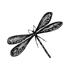 Odonata Icon