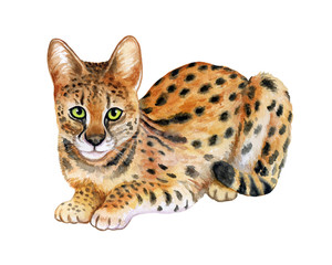Serval isolated on white background. Wild cat. Watercolor. Illustration. Clipart. Template. Picture. Handmade