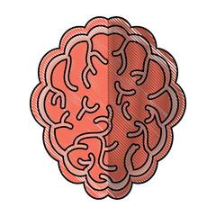 brain organ icon