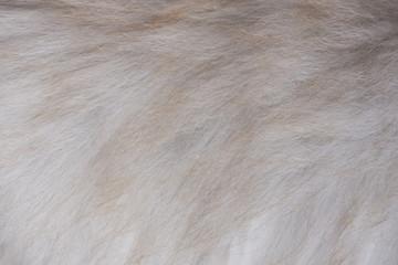 Gray brown fur texture