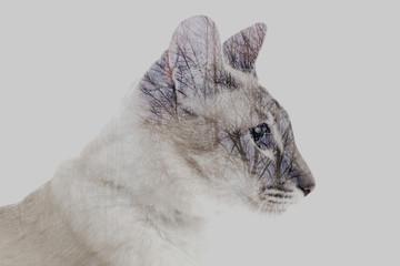 podwójna ekspozycja Syjamski kot