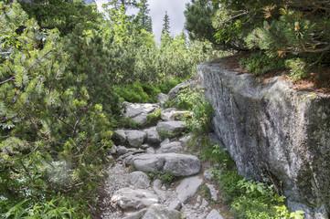 Mala studena dolina hiking trail in High Tatras, summer touristic season, wild nature, touristic trail