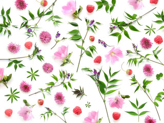 Composition pattern from plants, wild flowers and red berries, isolated on white background, flat lay, top view. The concept of summer, spring, Mother's Day, March 8.