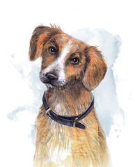 «Собака» акварельный рисунок.