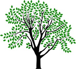 vector image of a tree in summer