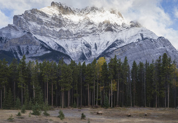 Elk in the Canadian Rockies, Banff National Park, UNESCO World Heritage Site, Canadian Rockies, Alberta, Canada, North America