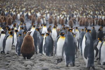 Penguin colony on South Georgia island