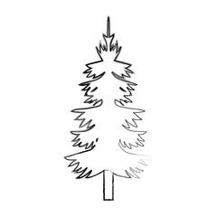 pine trees design