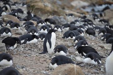 Penguin colony on Antarctica