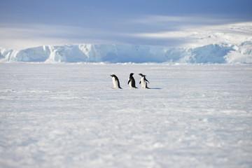 Antarctica pinguins sky