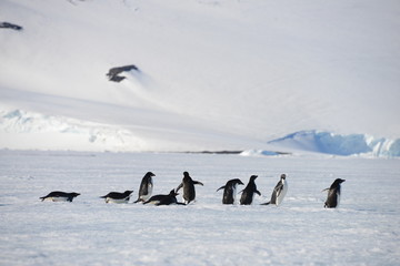 Antarctica group penguins