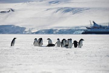 Antarctica pinguins