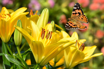 Schmetterling 261