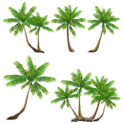 Coconut palm tree (Cocos nucifera). Set of hand drawn vector illustrations on white background.
