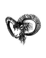 Vector ink sketch head mouflon