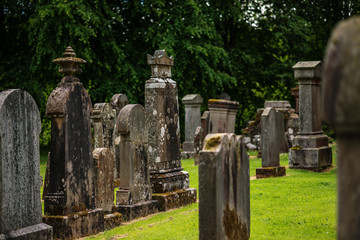 cemetery, scotland historical gravestones with plant