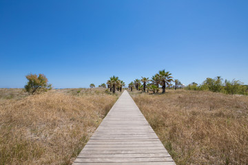 landscape wooden footway on wild nature towards palm trees, blue clear sky, next to Beach of Grao, in Castellon, Valencia, Spain, Europe