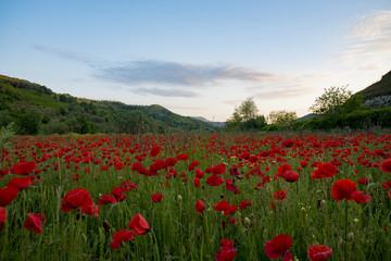 Il campo rosso