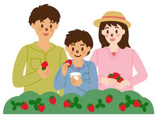 イチゴ狩りを楽しむ家族