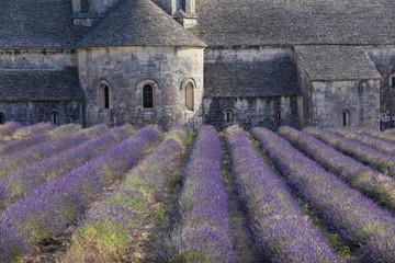 Garden Poster Lavender Champ de lavande devant l'abbaye Notre-Dame-de-Sénanque du XIIe siècle