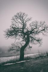 Bizarre tree in dense fog, misty background, vertical image