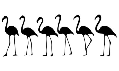 silhouette of flamingo birds running