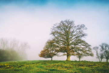 Autumn foggy misty morning with one big tree. Copy space