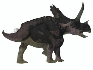 Agujaceratops Dinosaur Tail - Agujaceratops was a herbivorous ceratopsian dinosaur that lived in Texas, USA during the Cretaceous Period.