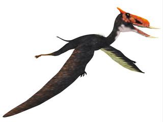 Dsungaripterus Flying Reptile - This carnivorous pterosaur lived in China in the Cretaceous Period and preyed on shellfish.