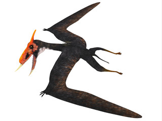 Dsungaripterus Reptile Side Profile - This carnivorous pterosaur lived in China in the Cretaceous Period and preyed on shellfish.