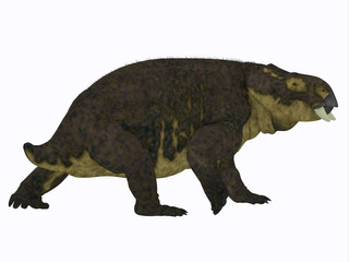 Placerias Dinosaur Tail - Placerias was a herbivorous dicynodont dinosaur that lived in Arizona, USA in the Triassic Period.