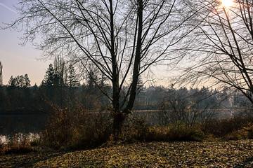 bare trees along lake
