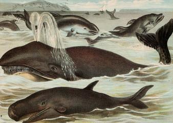 Illustration of mammals.